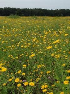 in-a-meadow