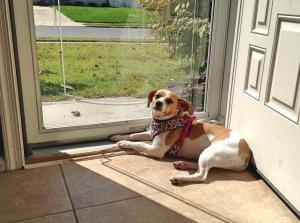 Daisy-in-the-sun