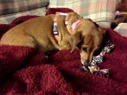"Kiwi sleeping with ""ropey"""