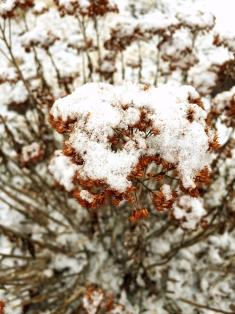 snowy-jade-2