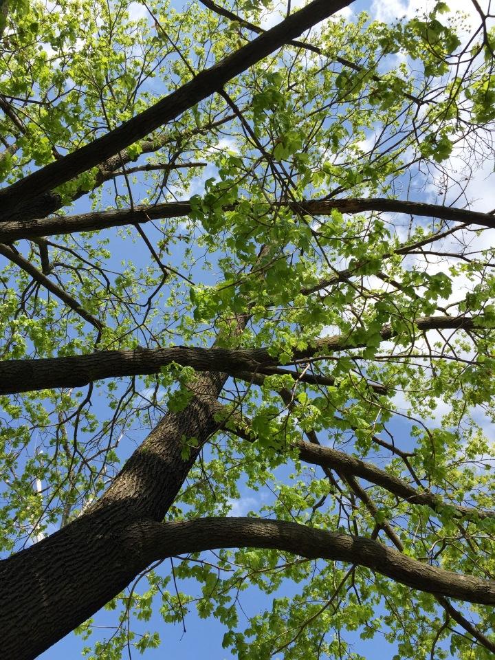 spring-tree