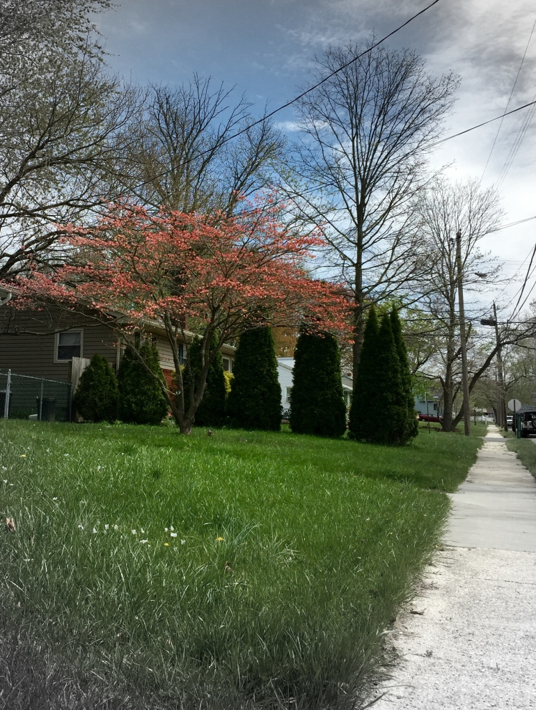 spring-walk-focal